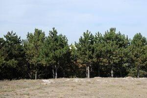 Perdea verde în jurul Parcului Industrial Ploieşti. Află cum poţi adopta şi tu un copac