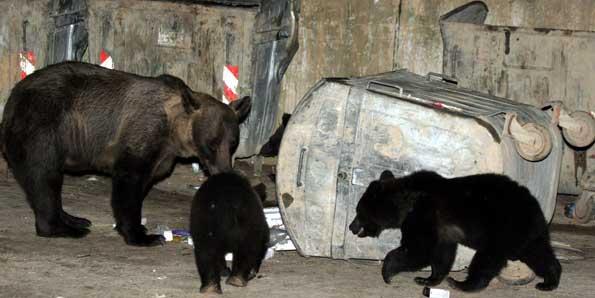 BUŞTENI / Invazie de animale sălbatice, pe timpul nopţii