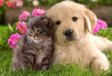 Toţi iubitorii de animale, aşteptaţi la Sinaia