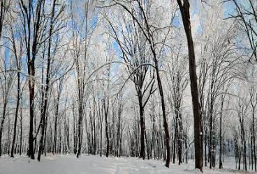 Bătrână de 80 de ani, rătăcită în pădurea Cazacu, Vărbilău UPDATE: femeia a fost găsită decedată
