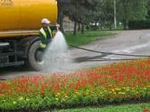 SGU stropeşte florile după ploaie? Află motivul