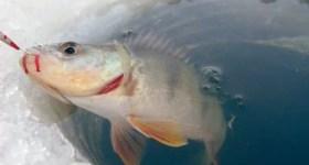 Avertisment ISU pentru amatorii de pescuit la copcă