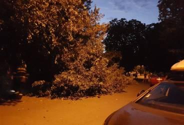 Un copac din curtea Colegiului Jean Monnet s-a prăbuşit peste un Duster