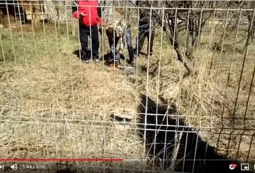 Fost consilier local din Bucov, acuzat că a tăiat câinele vecinului cu drujba, prin gard