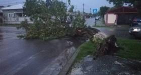 Estul judeţului: copaci smulşi din rădăcină şi stâlpi de electricitate prăbuşiţi de furtună
