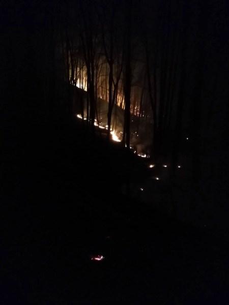Incendiu în pădurea de la Salcia