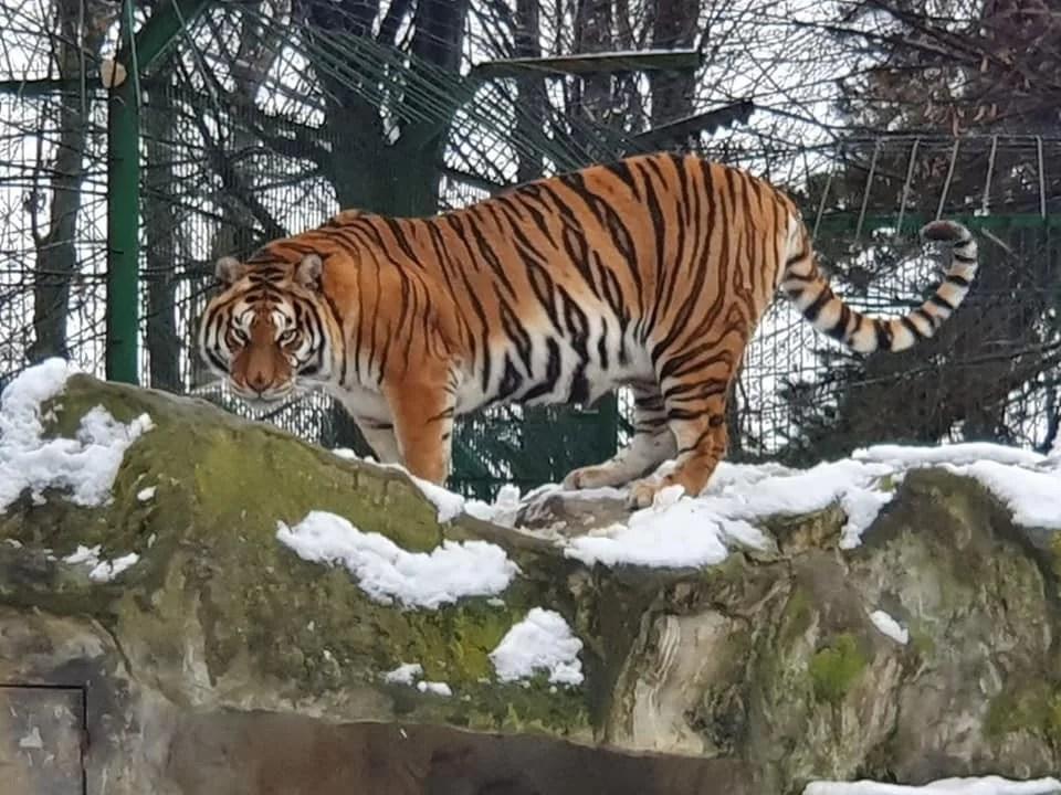 Moş Crăciun, la Grădina Zoologică de la Bucov