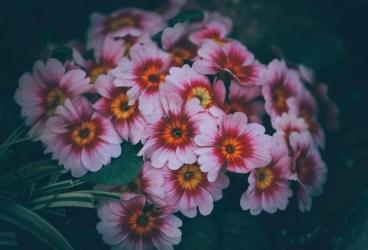 Livrare flori Bucuresti rapida pentru atunci cand uiti sa-i cumperi cadou