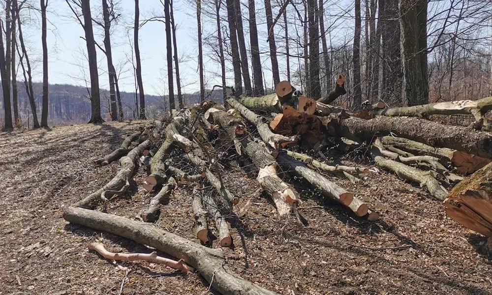 Accident de muncă mortal la o exploatare forestieră de la Comarnic