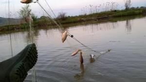 Pescari, prinși în plasa legii