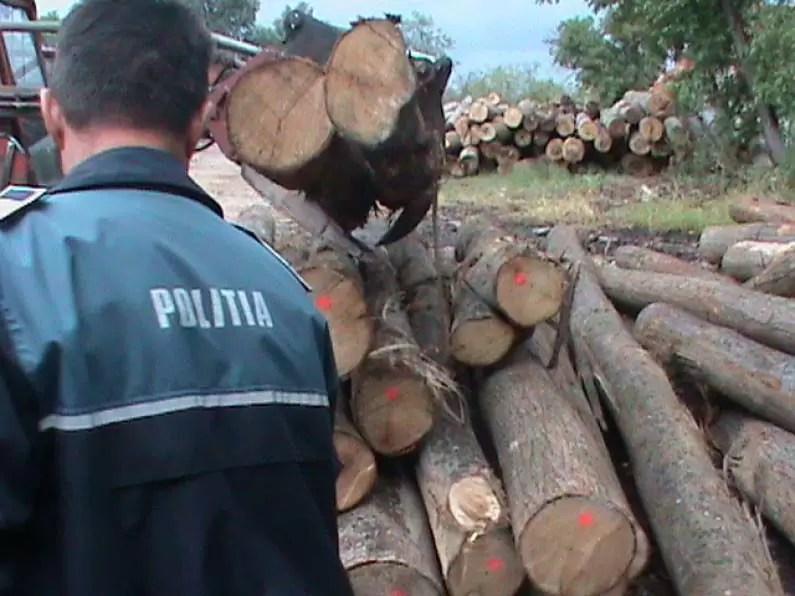 lemne-evaziune