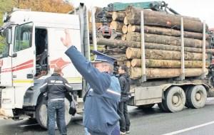 Sancțiuni dure pentru firmele care distrug pădurea