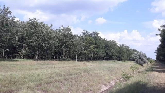 urz3 Urzica- zona salvată de la deșertificare
