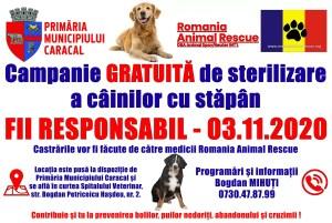 Caracal: Sterilizare gratuită a câinilor cu stăpân