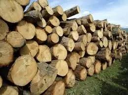 Direcția Silvică Olt vinde lemne de foc