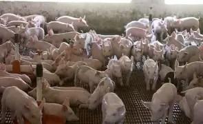 Primăria Sâmburești a achiziționat instalație mobilă de dezinfecție în vederea combaterii pestei porcine