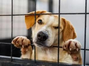 Câinii de la Sărăcești, în așteptarea stăpânilor