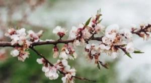 Prognoza meteo martie 2021. Cum va fi vremea în prima lună de primăvară