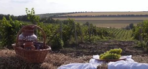 Chesnoiu: Sectorul vitivinicol are în continuare nevoie de sprijin
