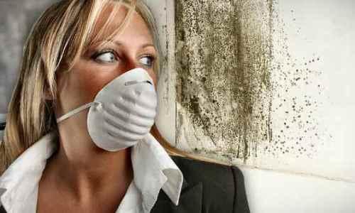 Myku shkaktar i dhjetra sëmundjeve, zhdukeni nga shtëpia një herë e mirë