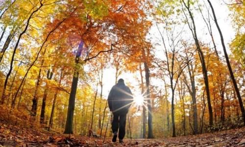 Stina E Alergjive Të Forta – Si Të Mbroheni Nga Sëmundjet E Vjeshtës