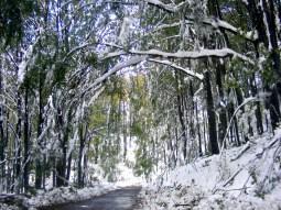 Drumul-spre-Sinteu-in-asteptarea-oaspetilor