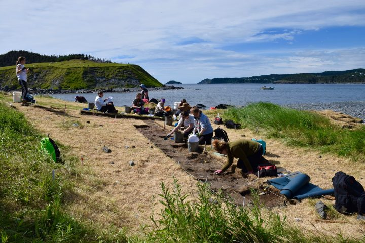 Archaeology summer field school students digging at Tors Cove.