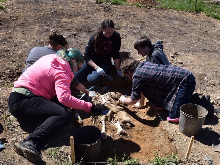 Prior to the Tors Cove dig, archaeology students unearthed a synthetic skeleton at Memorial University's Botanical Garden.