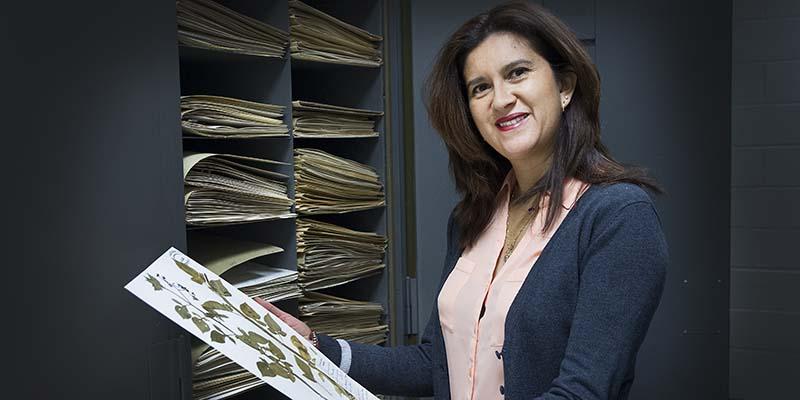 Dr. Julissa Roncal