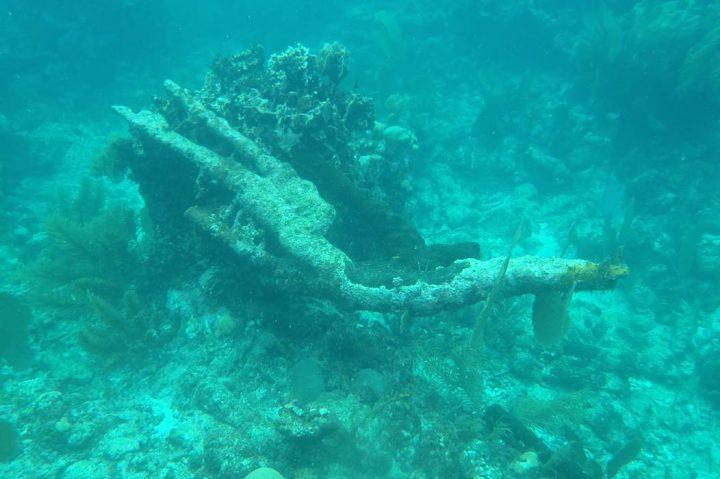 Dead coral colony