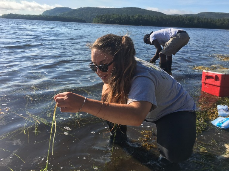 CFER workterm student Machaela MacDonald collecting eelgrass seed shoots in Swift Current, NL for transplanting in Placentia Bay.