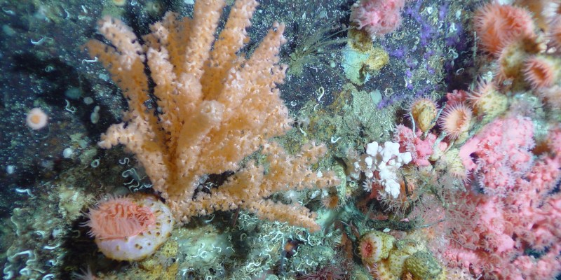 (3) Deep-water coral from the continental slope off Nova Scotia provides habitat for many other species. Its slow growth and delicate structure make it highly vulnerable to human impacts.