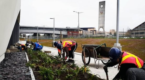 Several people in safety gear plant small plants along a white building's edge. The Memorial Tower and University Centre are visible in the background.