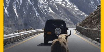 Hunza Yak on KKH