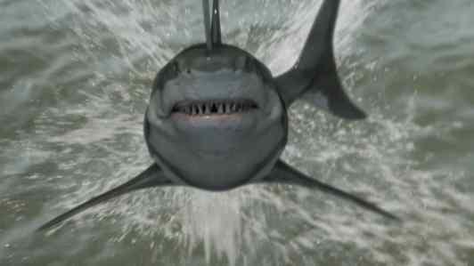Zombie Shark 7