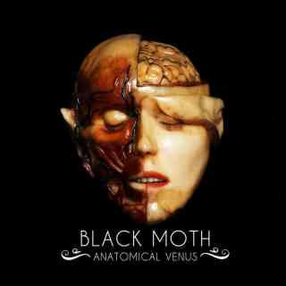 Black Moth 2