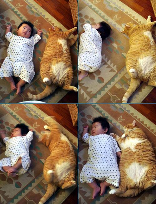 Garfield Cat Real : garfield, Real-life, Garfield?, Great, Gabsby