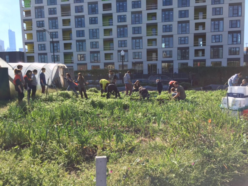 Project-based learning at City Farm in Chicago