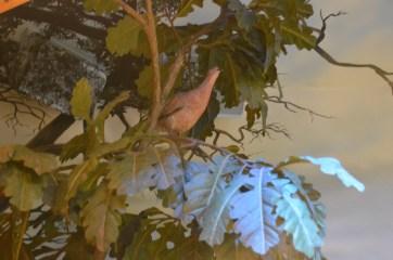 Messenger pigeon!