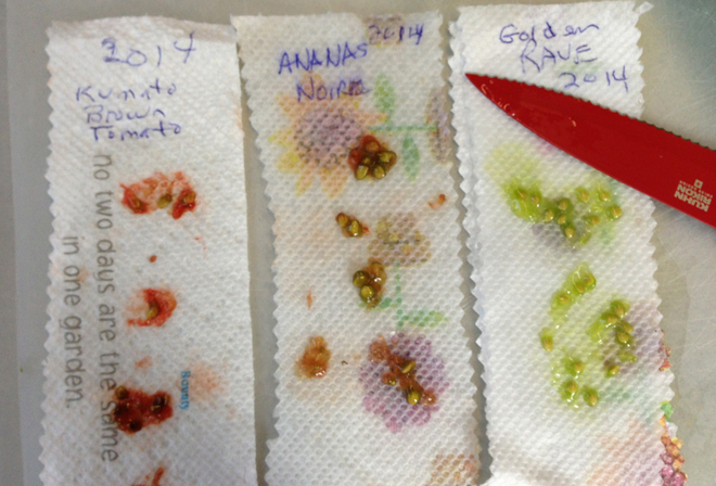 3 seeds on towel