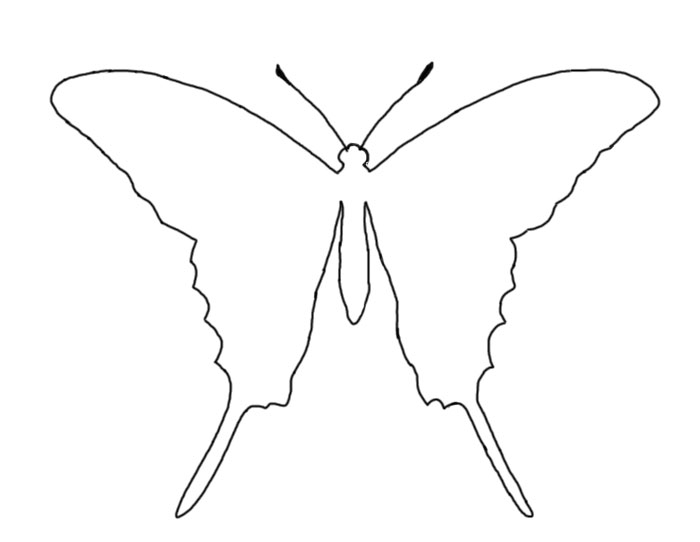 Photos of butterfly outline template cut out 2