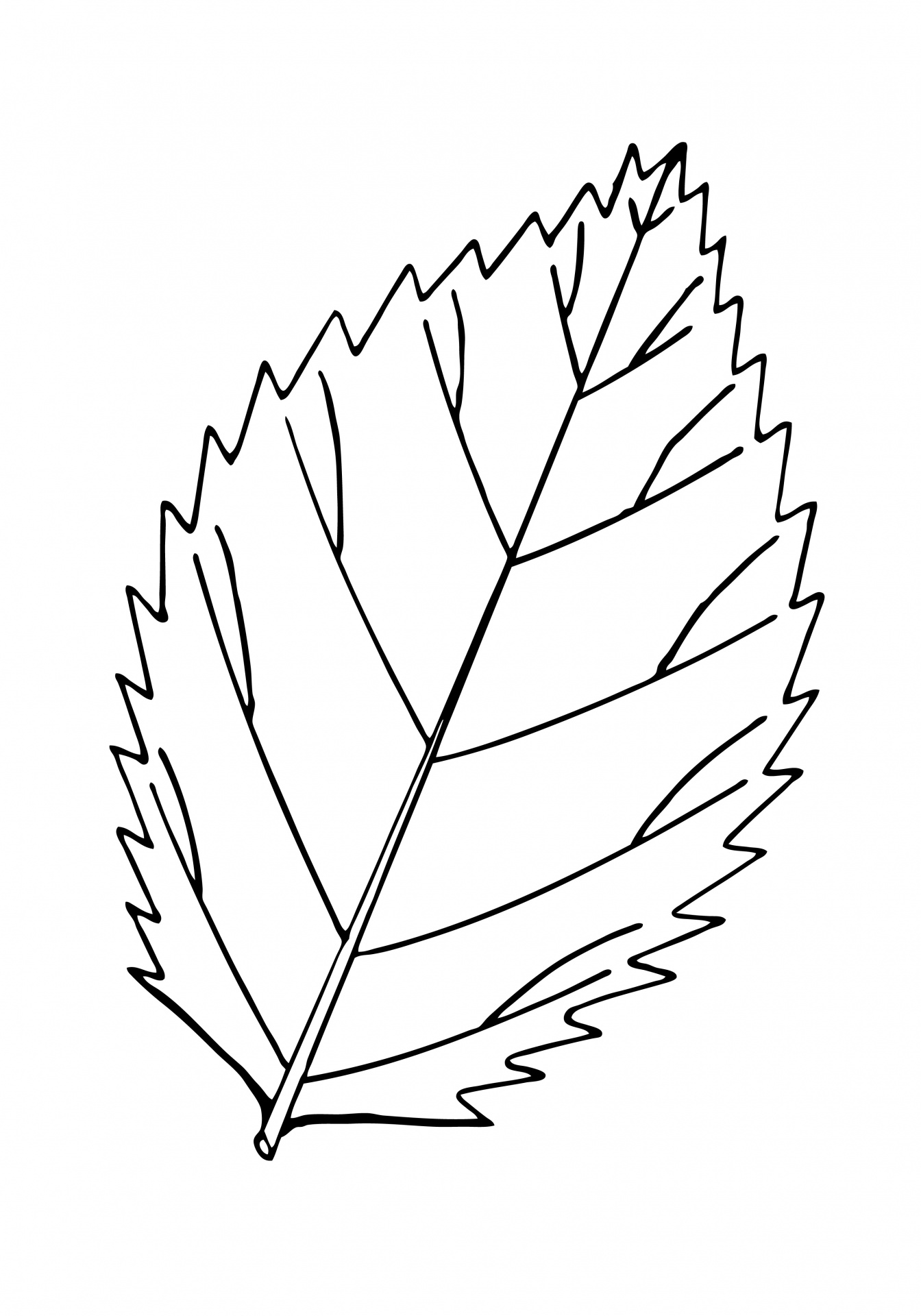 Leaf Outline Clipart Gclipart