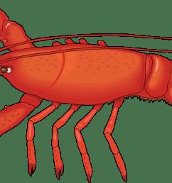 lobster clip art free clipart images [ 1331 x 646 Pixel ]