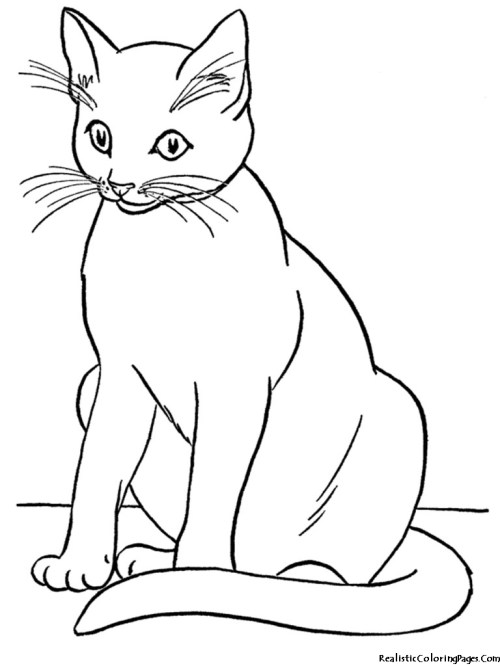 small resolution of cat black and white realistic coloring pages of cats clipart