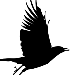 flying crow silhouette clip art proj gn nimh [ 1893 x 2400 Pixel ]