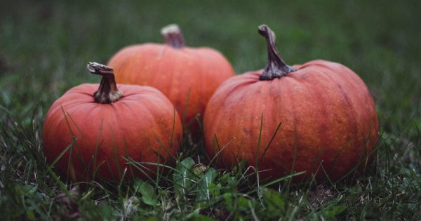 Pumpkins on grass which are symbolic of the gay men's halloween retreat