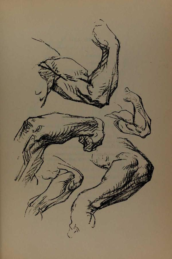 anatomia-constructiva-george-bridgman-codos