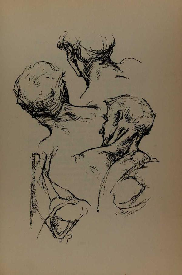 anatomia-constructiva-george-bridgman-cuello