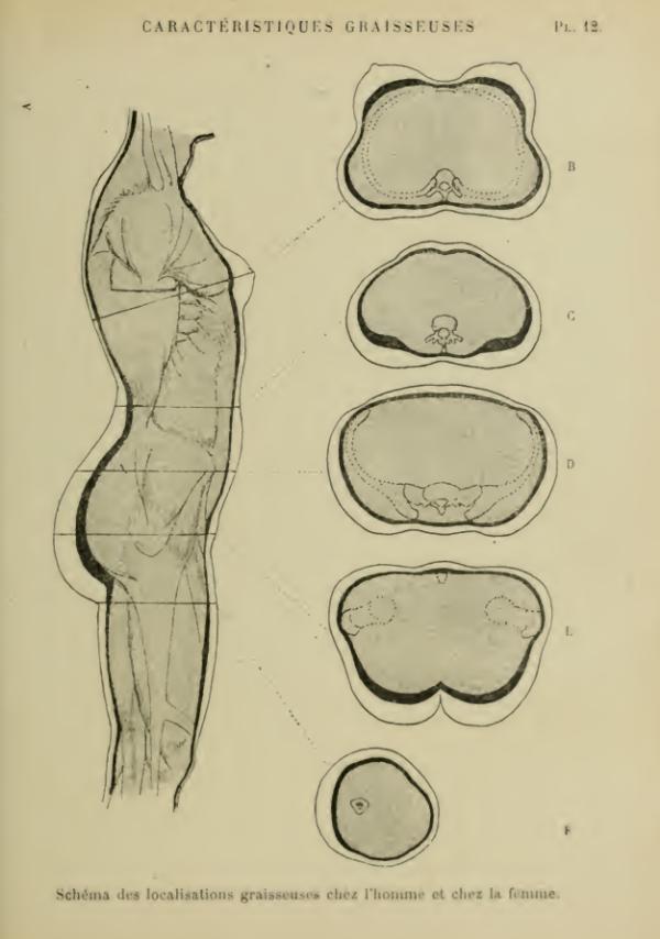 anatomia-humana-femenina-caracteristicas-grasas-cuerpo-femenino-vista