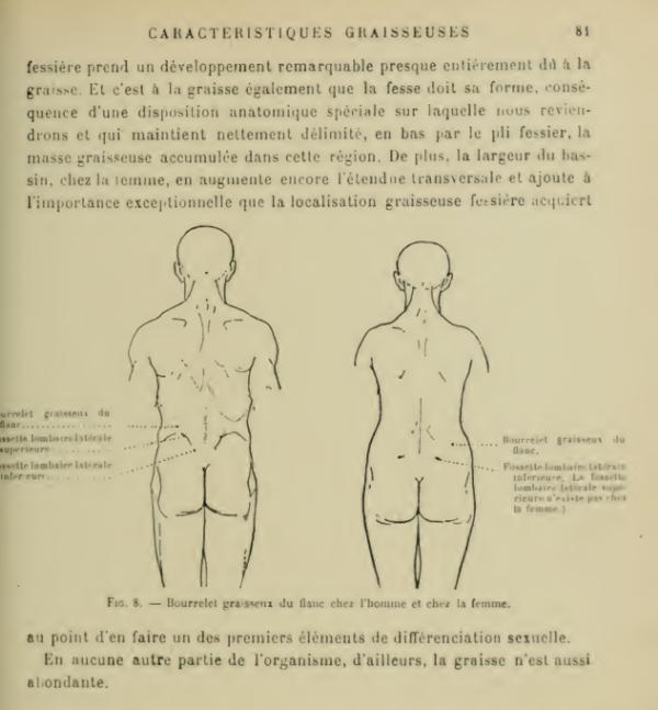 anatomia-humana-femenina-caracteristicas-grasas